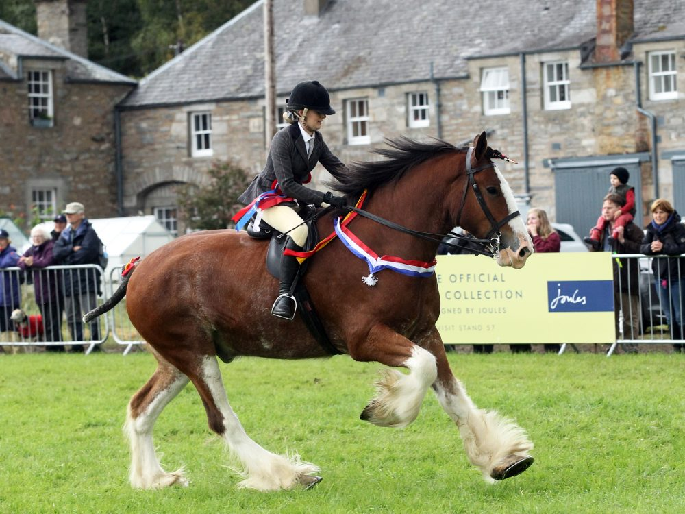 Ridden Clydesdale & WHP Qualifiers