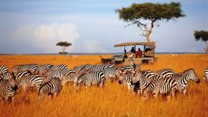 aardvark-safaris