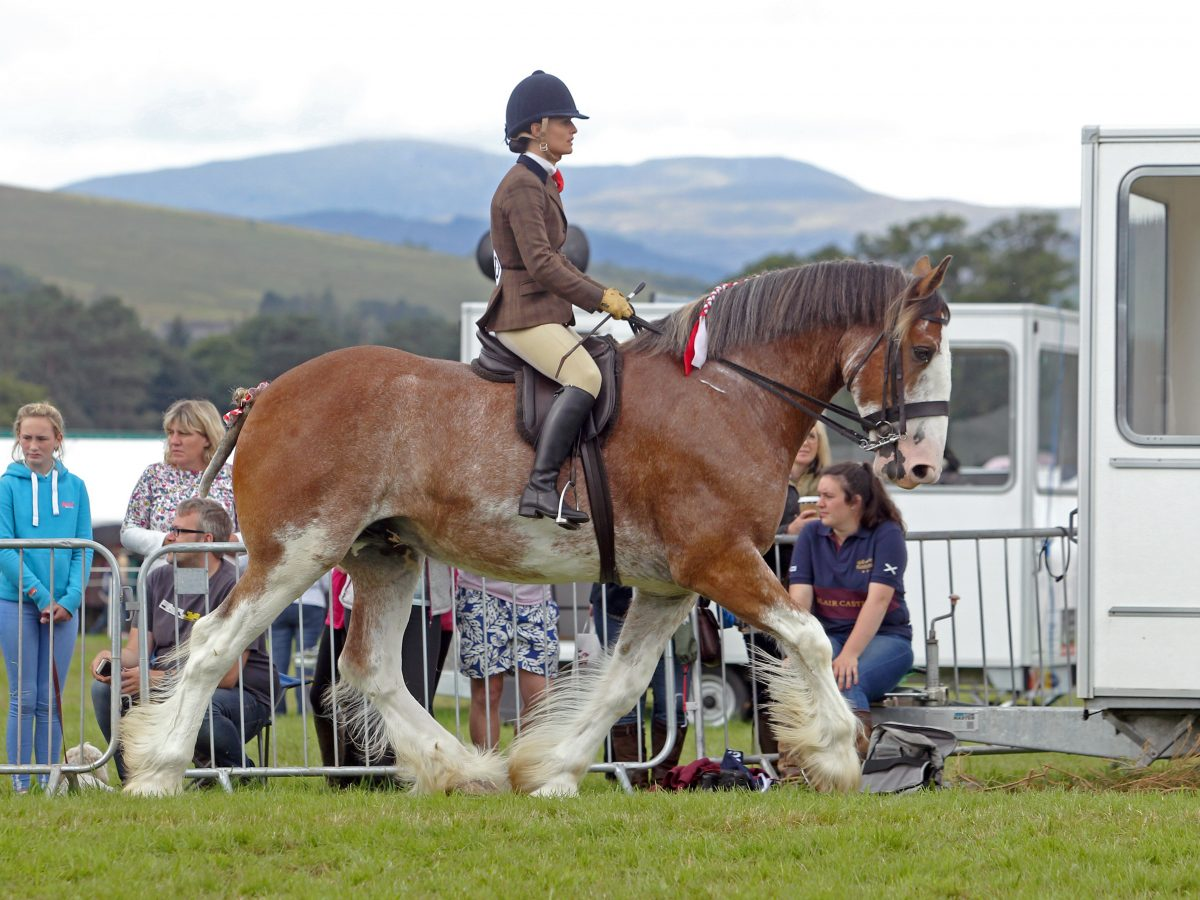 How To Train Your Draft Horses For A Pleasant And Pleasure Riding?