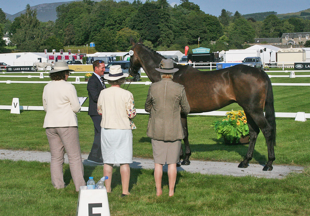 First horse inspection at the Land Rover Blair Castle Horse Trials