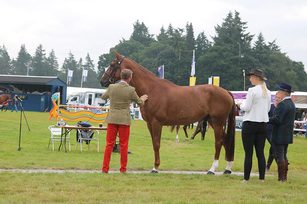 Final Horse Inspection